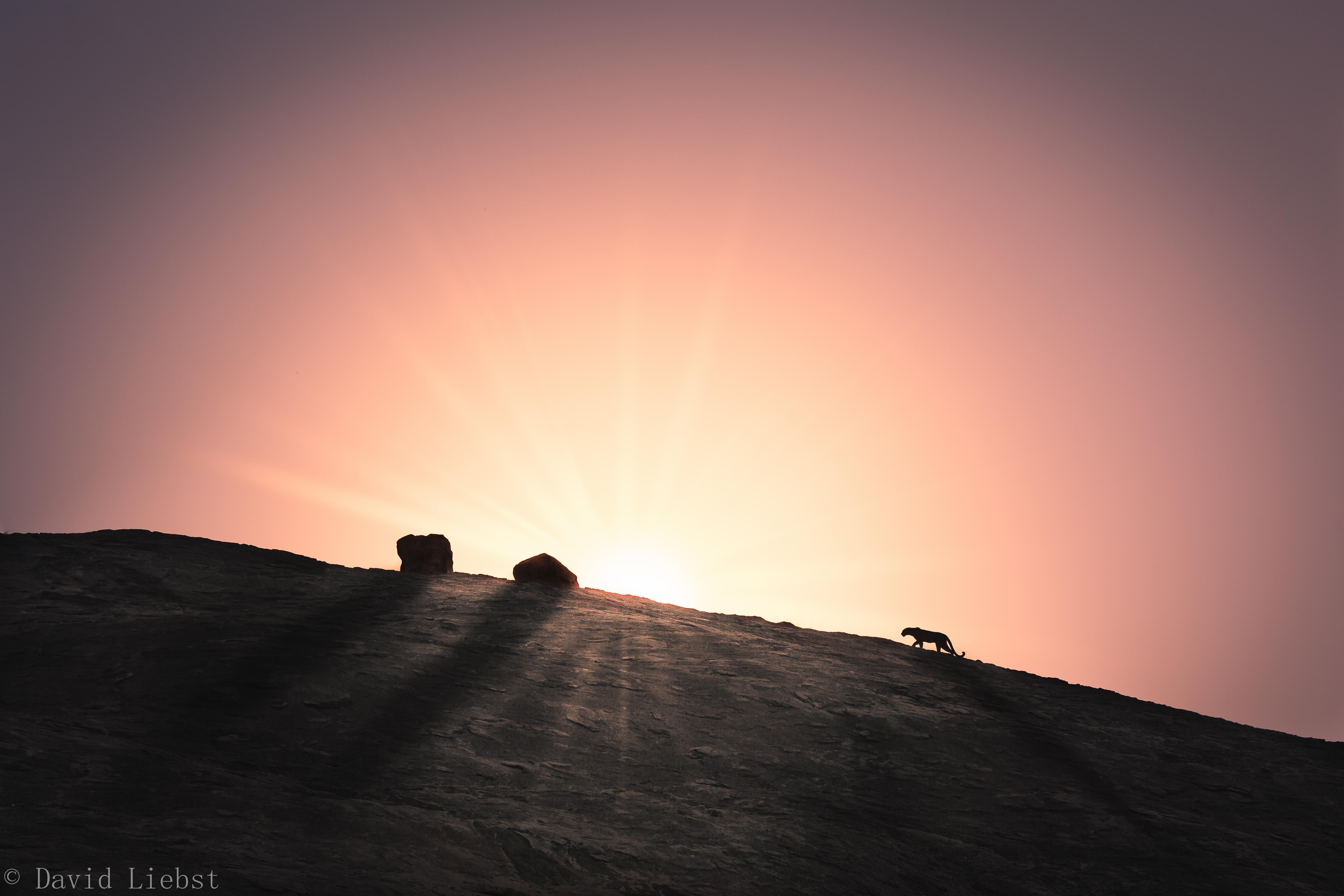 kilimatonge-leopard-sunrise