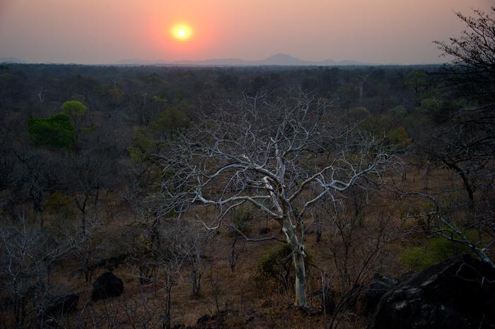 sunset-leopard-majete-reserve-malawi
