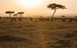 migration-at-sunrise