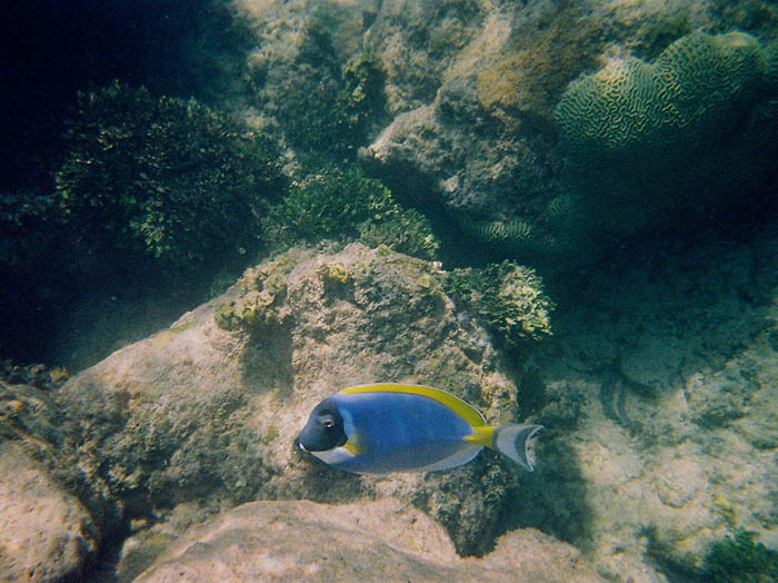 watamu-marine-life-2