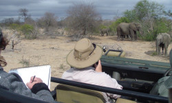 art-on-safari-sketching-elephants
