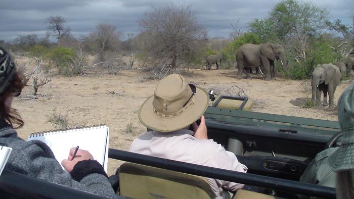art-on-safari-sketching-elephants
