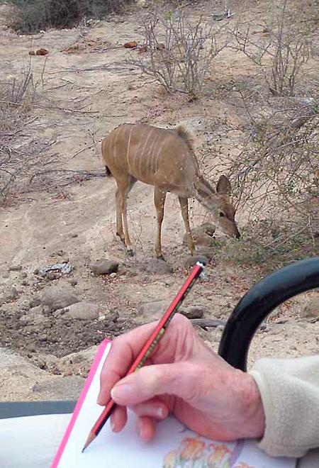 art-safari-drawinng-kudu