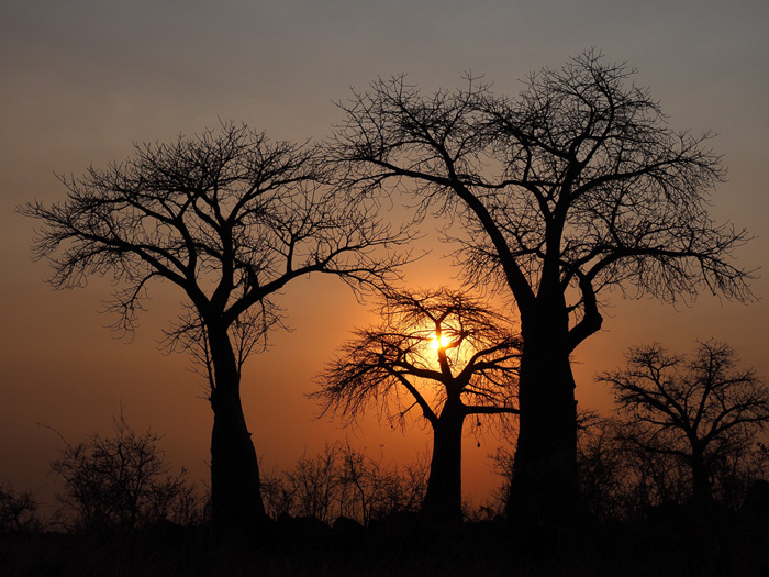 A baobab sunset ©Joe Knapman