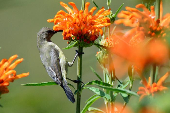sun-bird-at-the-cavern