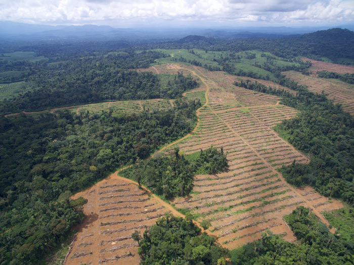 SGSOC have present in Cameroon since 2009. ©Environmental Investigation A
