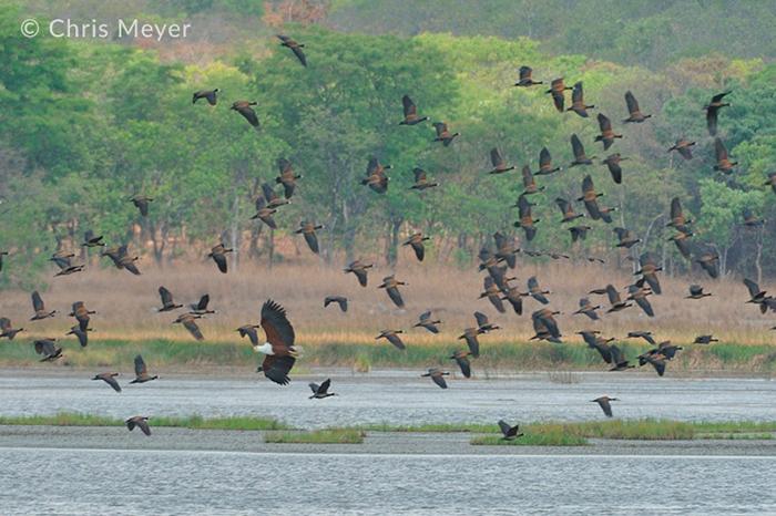 kasanka-birds-of-prey