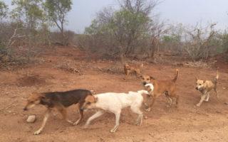dogs-kruger