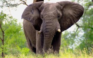 elephant-arno-meintjes