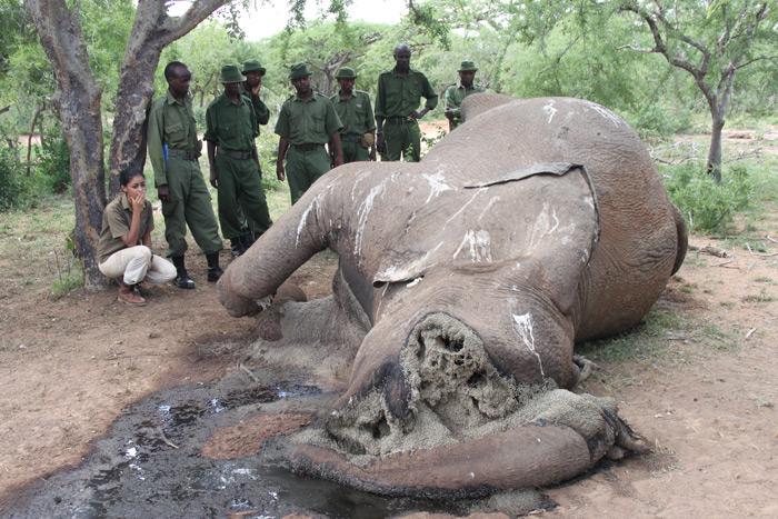 elephant-carcass-rangers