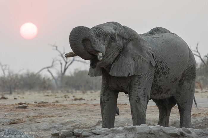 Elephant drinking ©Francois Van Heerden