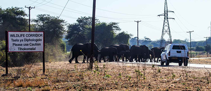 elephant-foot-traffic