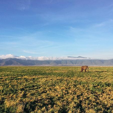 elephant-infront-of-kilimanjaro