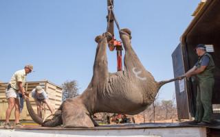 elephant-lift