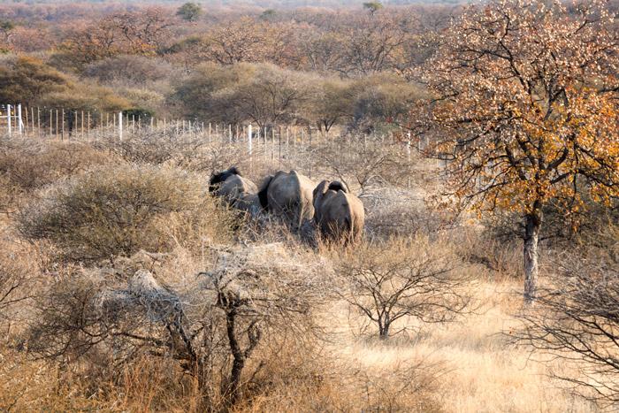elephant-release-mapesu