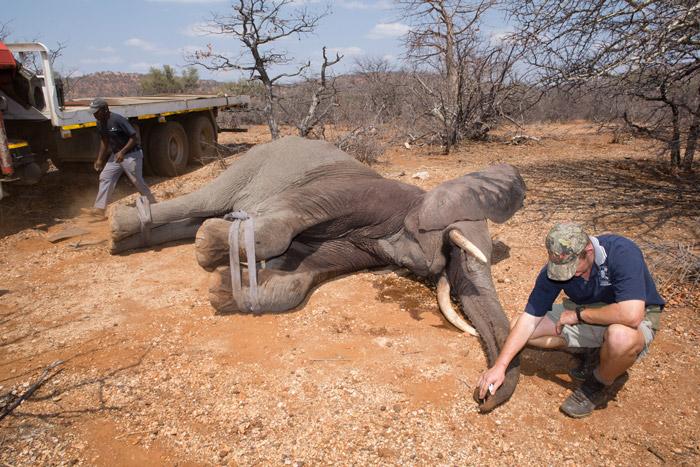 elephant-relocation-mapesu
