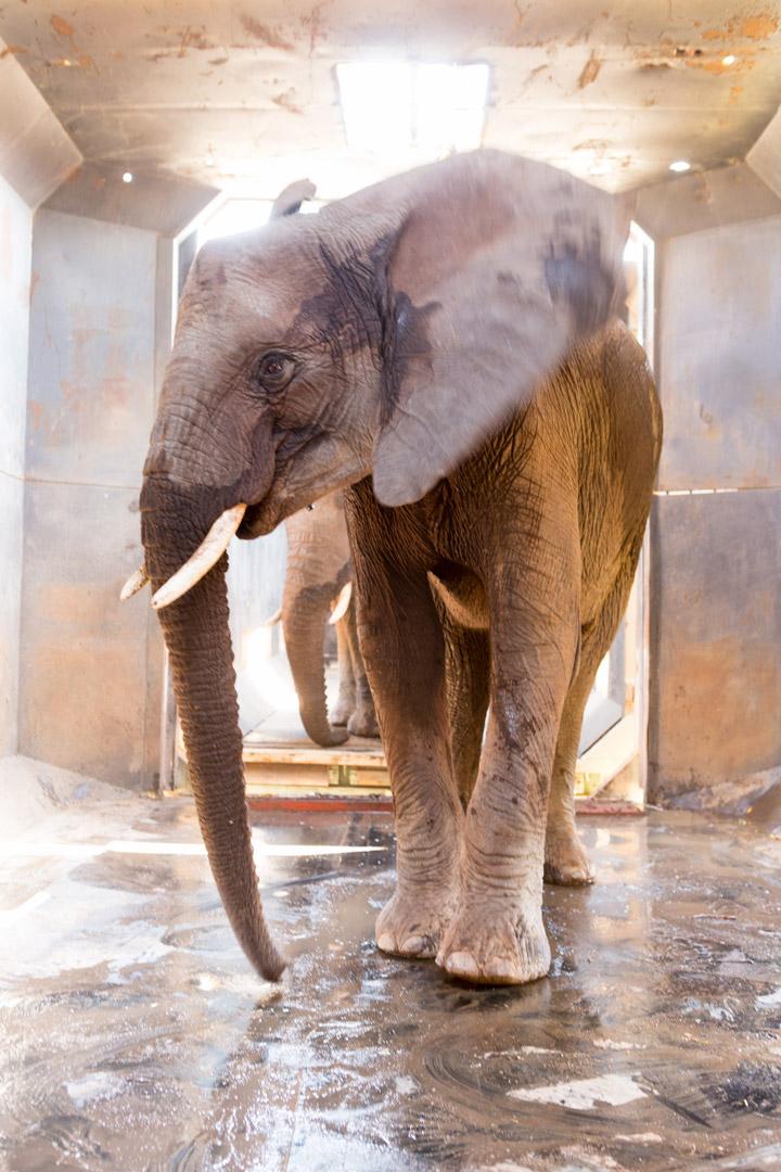 elephant-relocation