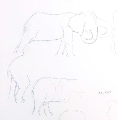 elephant-sketches
