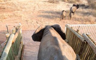 elephants-relocated