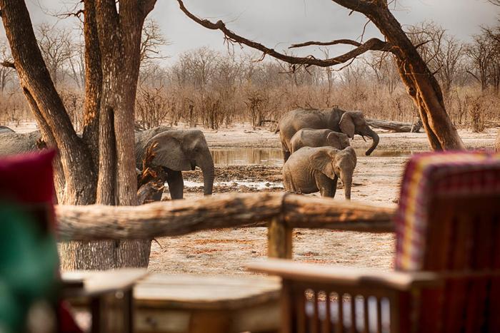 Elephants, Moremi, Botswana