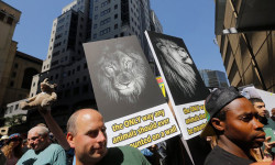 Animal rights activists carry placards during an anti- canned-lion protest during the first day of the COP17 Cites conference in Johannesburg. Photograph: Kim Ludbrook/EPA