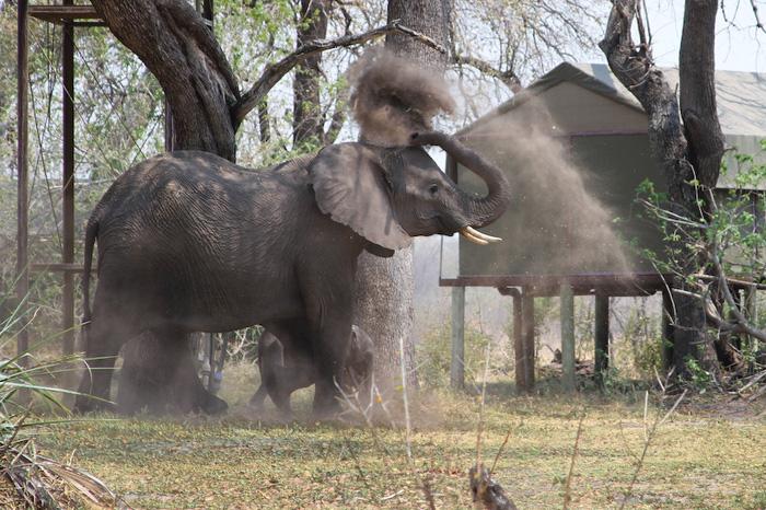 mother-calf-elephants