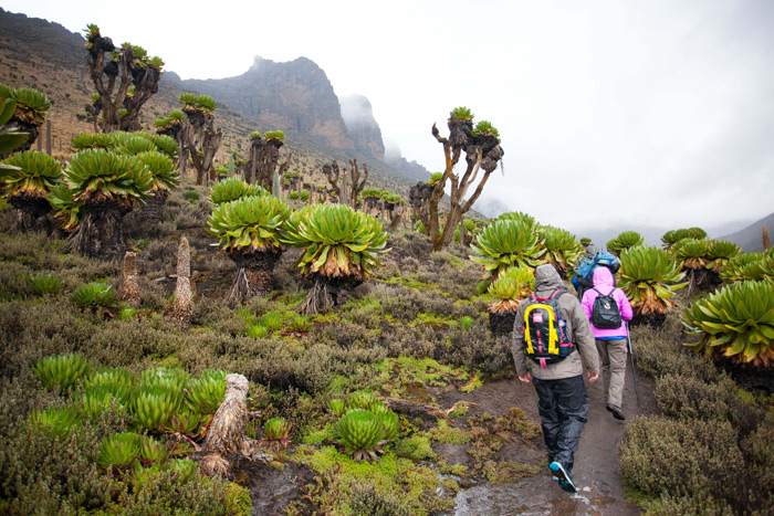 mount-kenya-hike