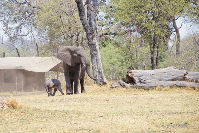 newborn-elephant