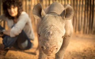 orphan-rhino