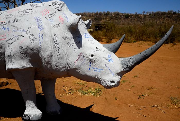 rhino-sculpture
