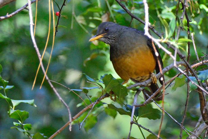 spotting-rare-birds