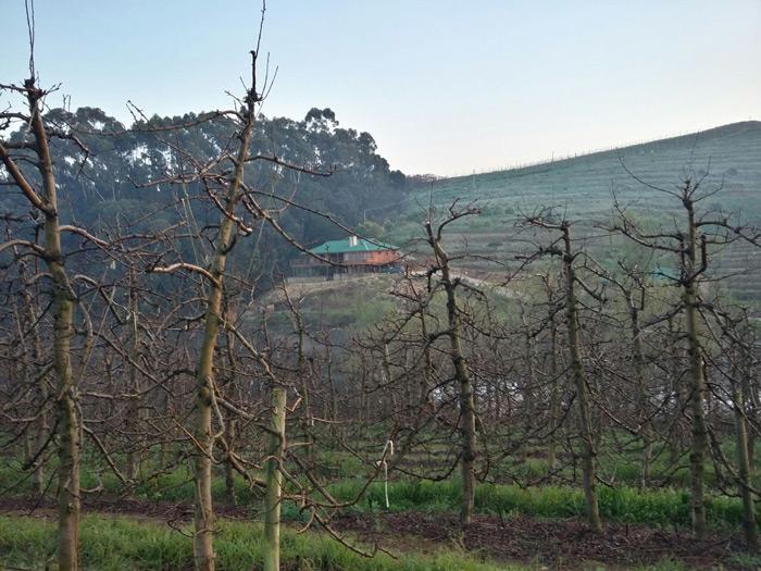 view-through-the-vines-elgin