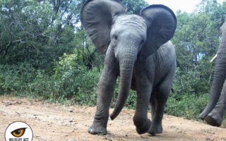 wildlife-act-elephants