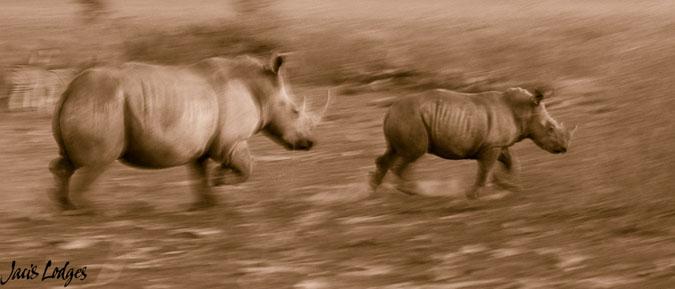 rhino-run