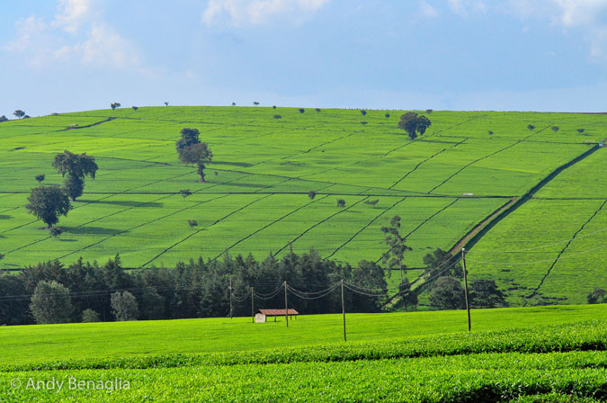 Nandi Hills Kenya