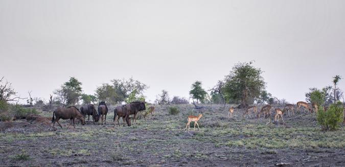 wildlife-timbaveti