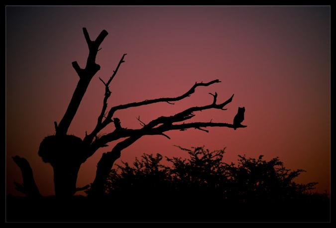 night-owl