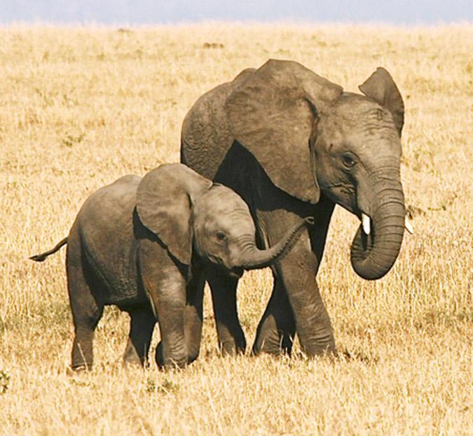 elephant-siblings-francis-garrard
