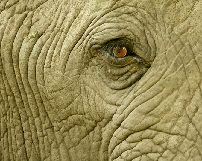 elephant-eye-conservation-action-trust-francis-garrard