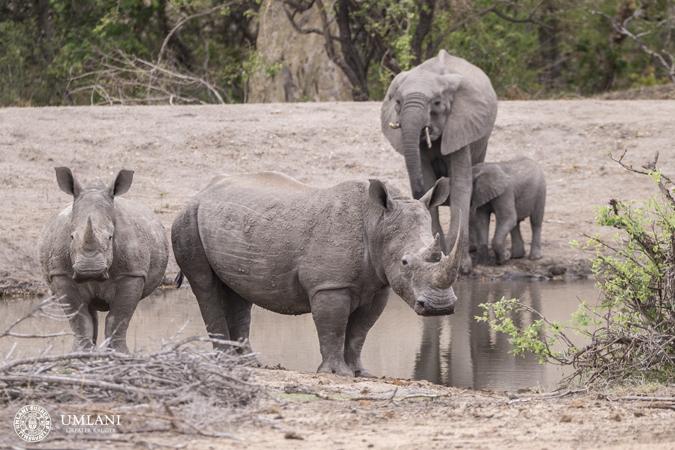 elephant-rhino-waterhole