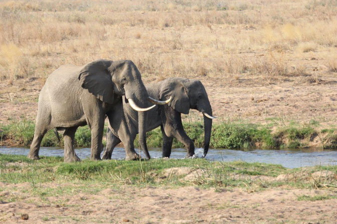 elephants conservation action trust