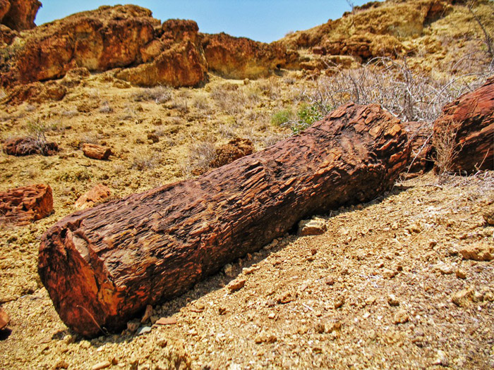 petrified-forest_well-preserved-log