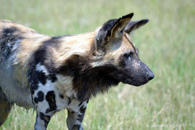 portrait-of-a-wild-dog