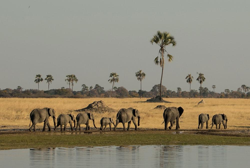 A family of elephants in Hwange ©Jo Sharp