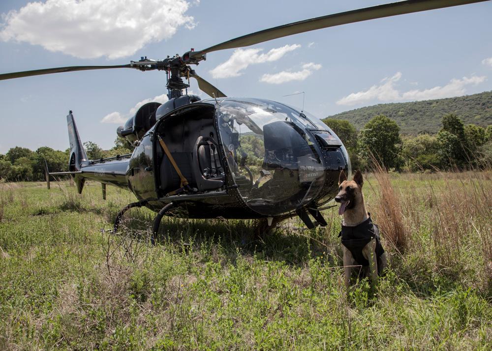 anti-poaching-dog-helicopter