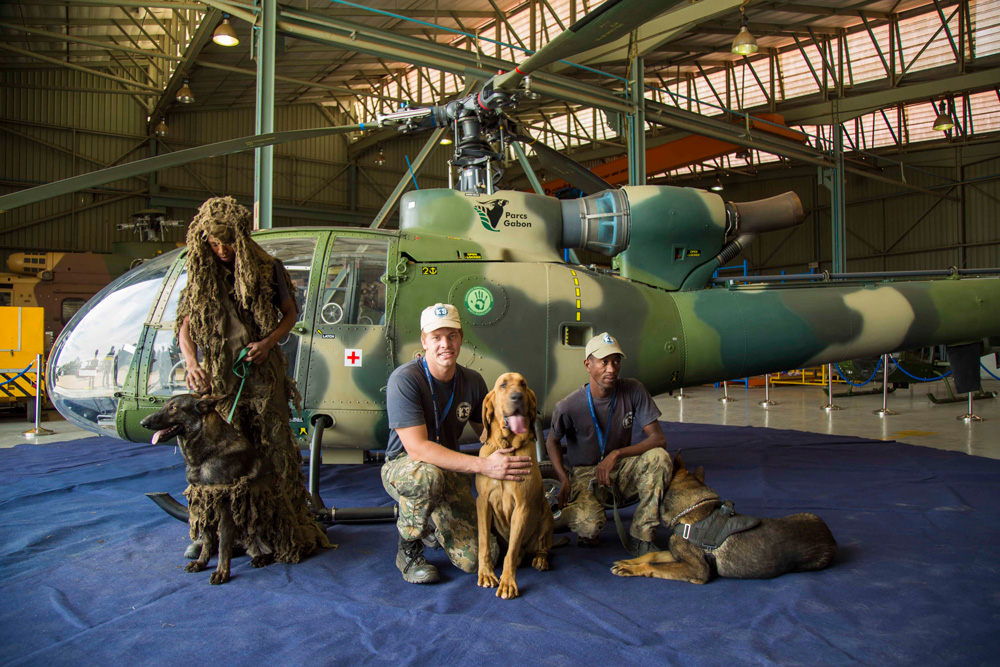 anti-poaching-dogs-helicopter