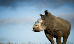 hope-rhino-saving-survivors