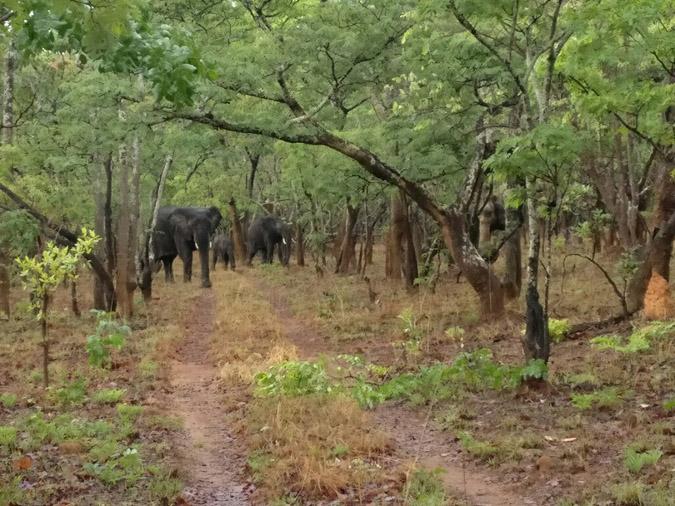 kasakna-elephants
