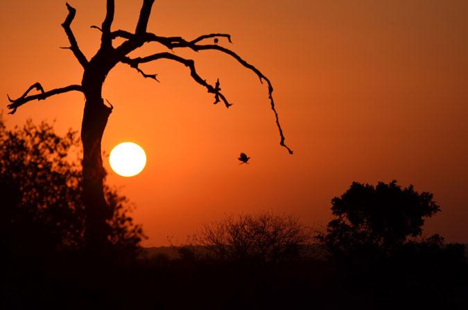kruger-sunset-july-africageo