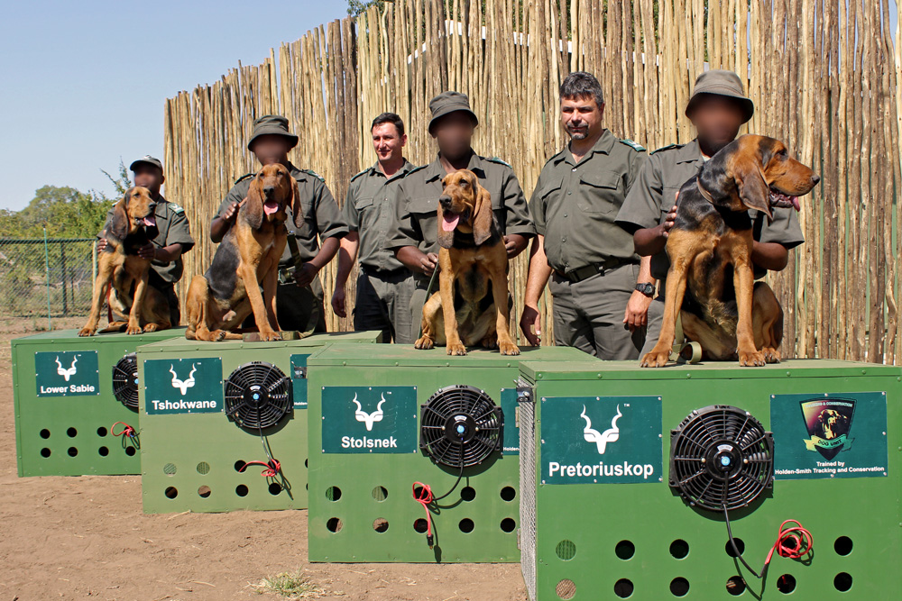 new-dogs-kruger-canine-unit